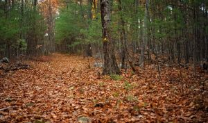 Image of a trail with fall leaves on it